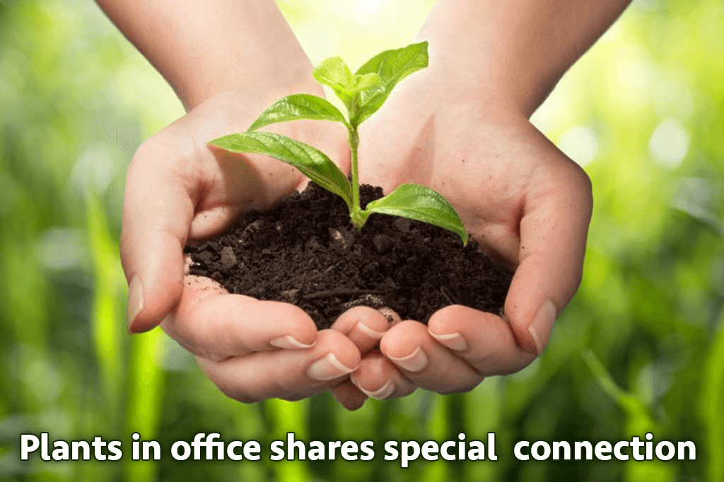 plants-in-office-shares-a-special-connection